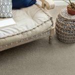 Pawparazzi | Yuma Carpets & Tile Inc