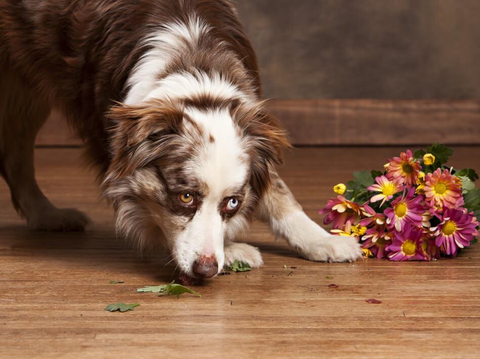 Hardwood spill | Yuma Carpets